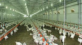 Prosyane Poultry Farm