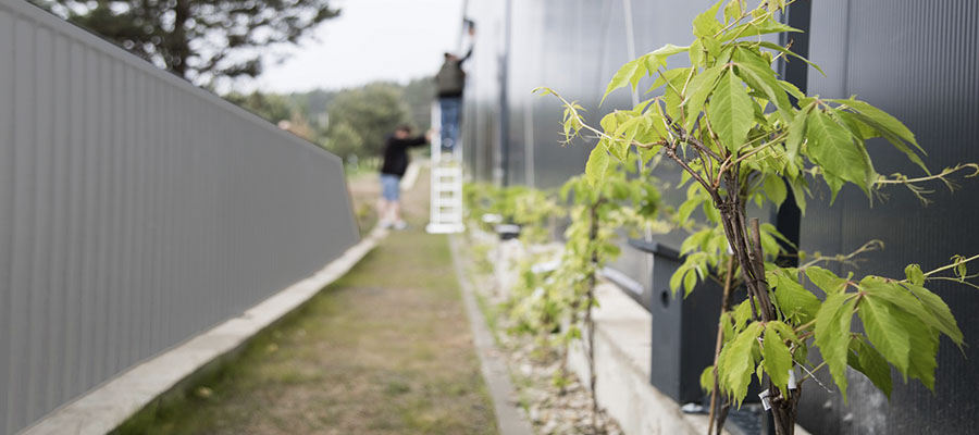 Zali зелене будівництво